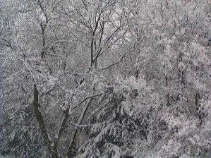 arbres-sous-la-neige-1-.jpg